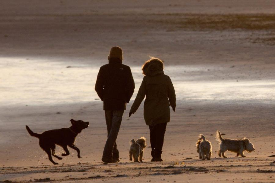 05 - Dog walking, Wittering by Alex Anderson